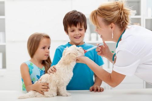Vaccinations Springfield, IL